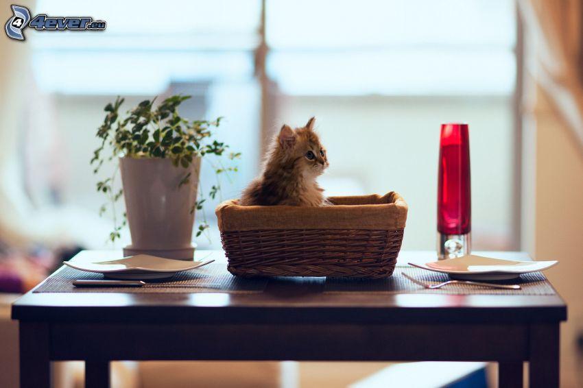Kätzchen in einem Korb, gedeckter Tisch