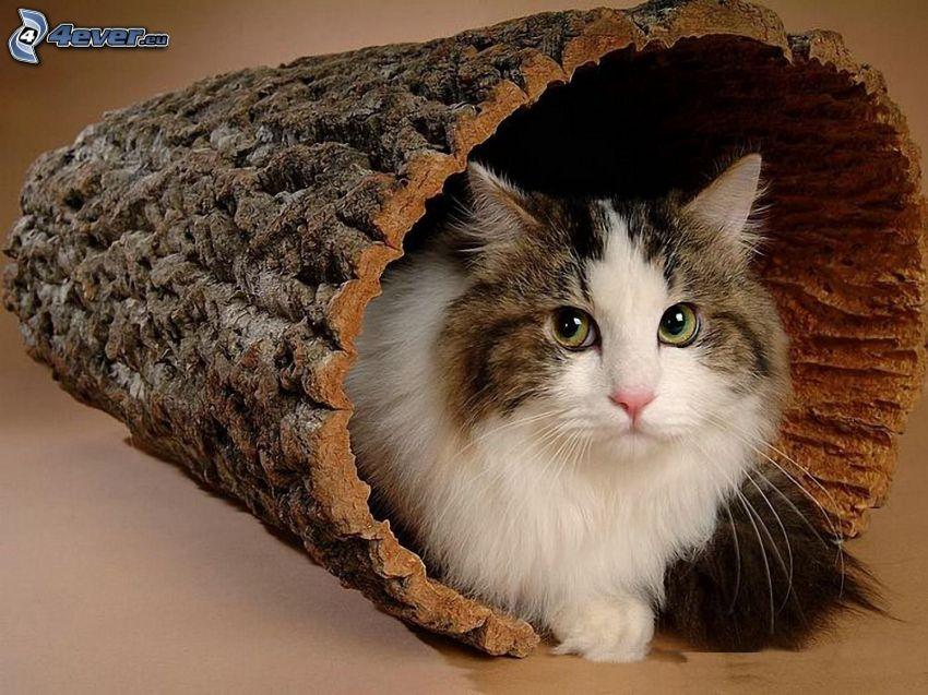 Katze, Baumrinde, Stamm