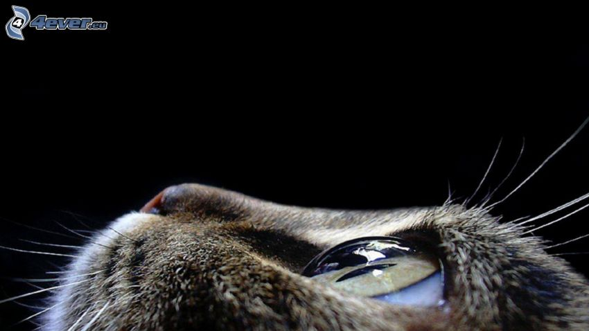 Katze, Blick, Auge