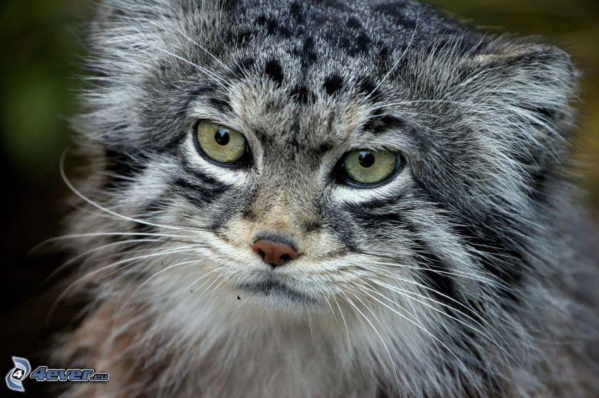 Katze, Blick