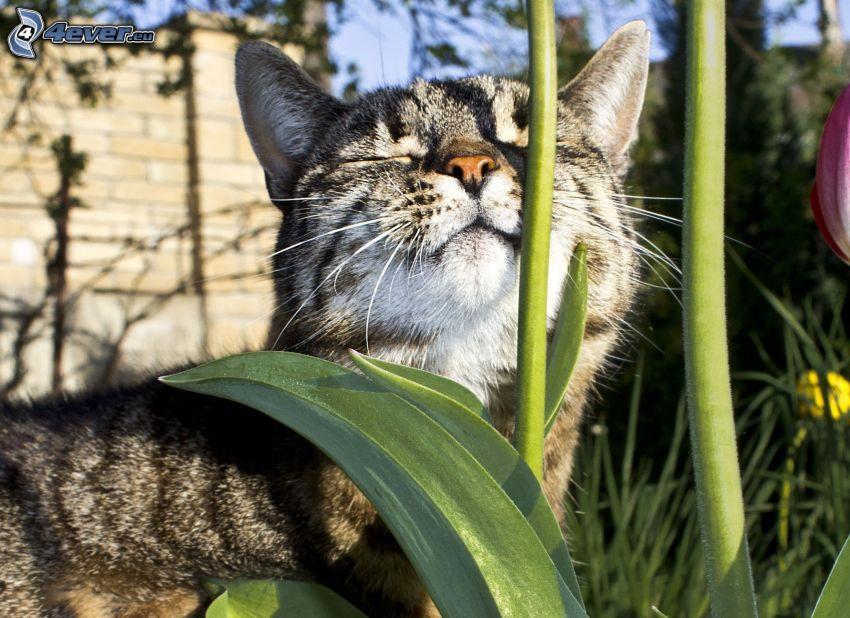 Katze, Blume