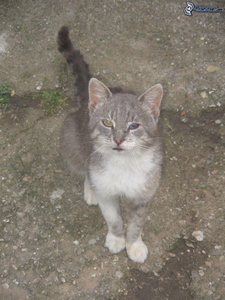 Katze, farbigen Augen