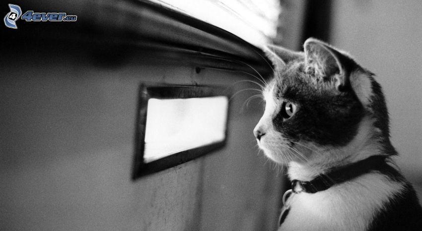 Katze, Fenster, schwarzweiß