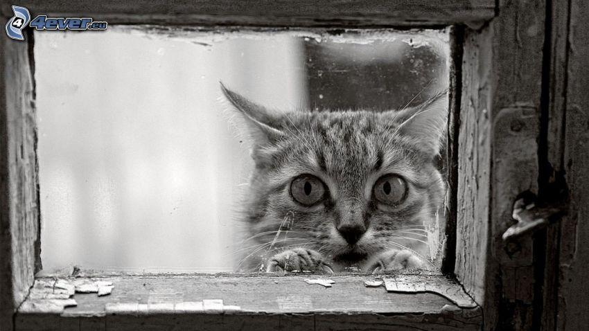 Katze, Fenster