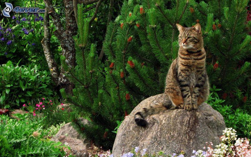 Katze, Geröll, Nadelbaum