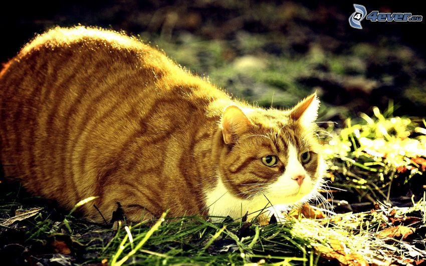 Katze, Gras