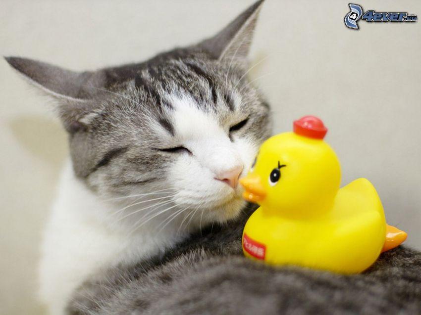 Katze, Gummi-Ente