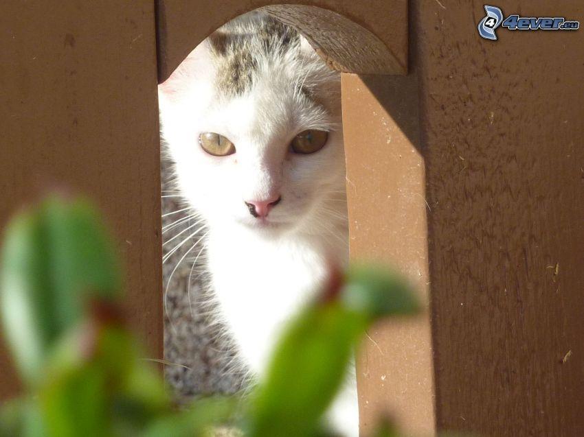 Katze, Holzzaun
