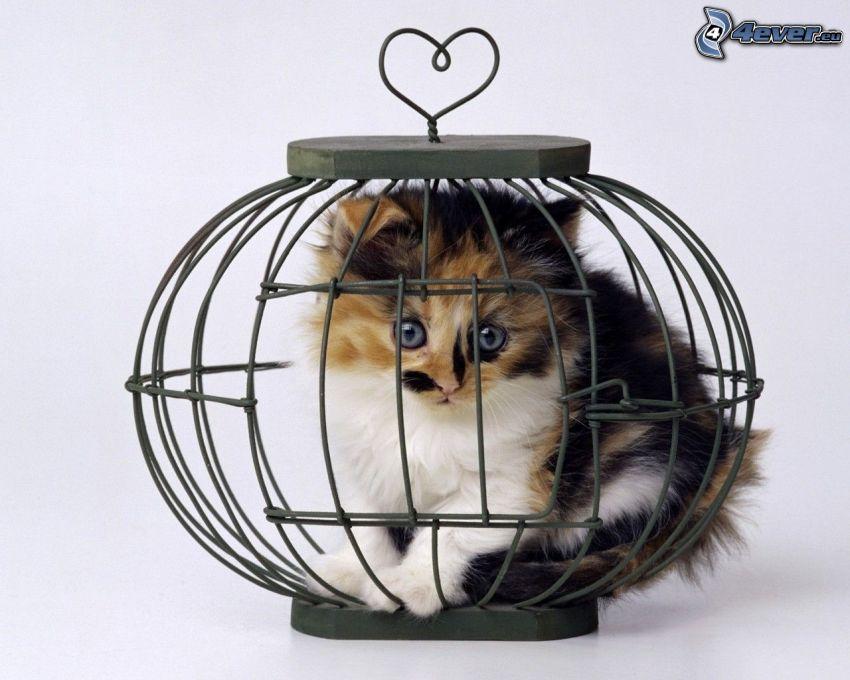 Katze, Käfig