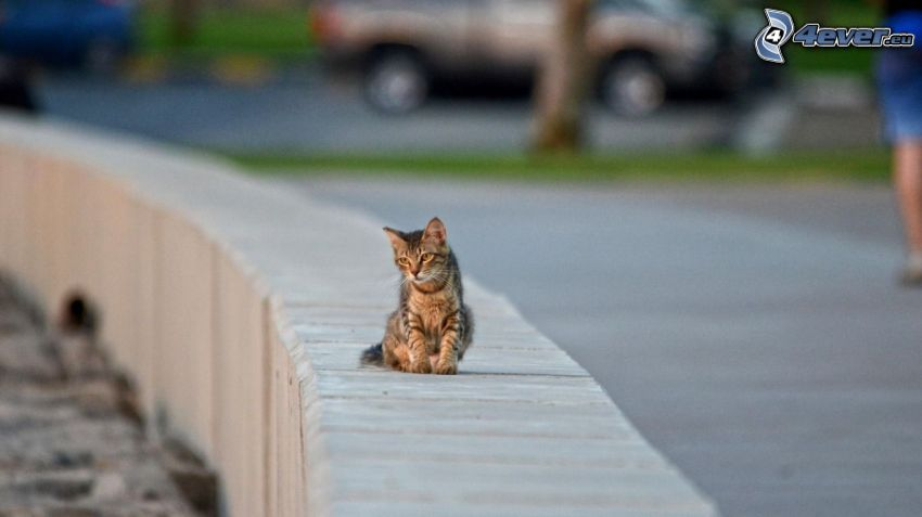 Katze, Mauer