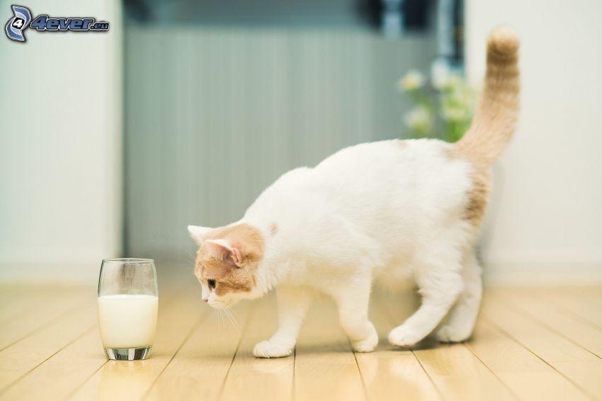 Katze, Milch