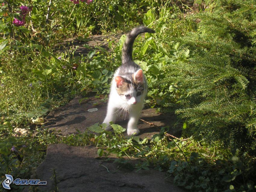 Katze, Natur, Tiere