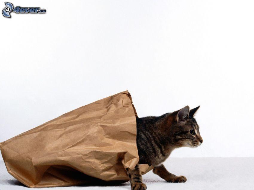 Katze, Papiersack