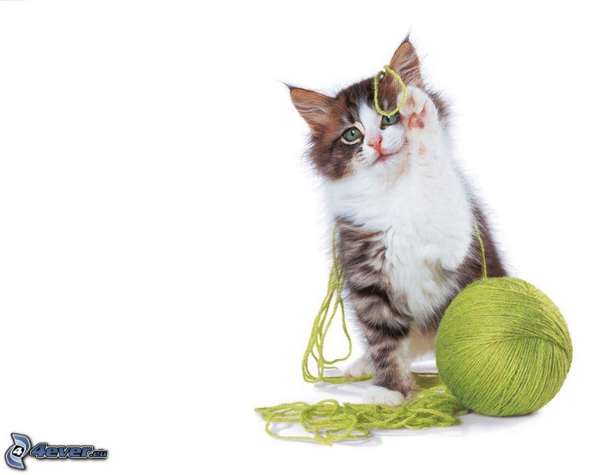 Katze, Strang