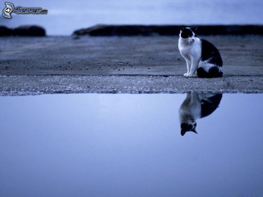 Katze, Wasser, Spiegelung