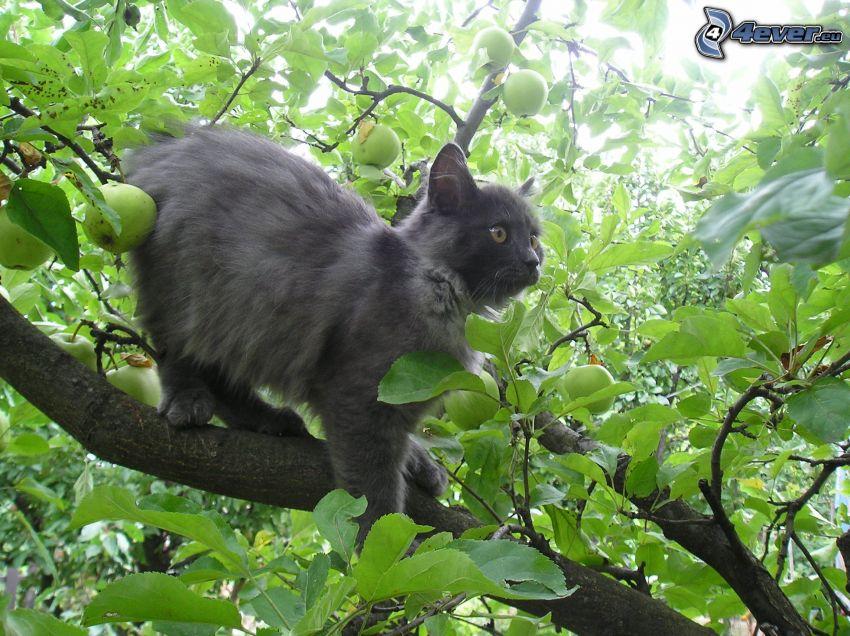 Katze auf einem Baum, Apfelbaum, Äste, Blätter, schwarze Katze