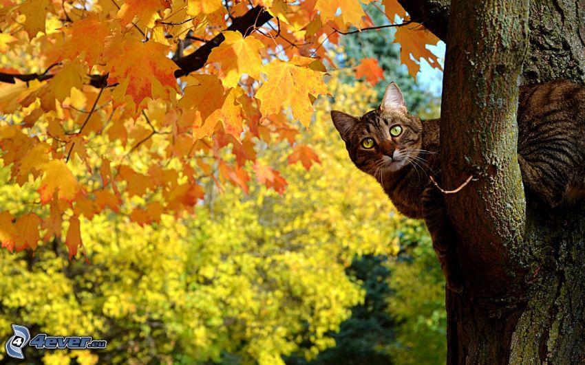 Katze auf einem Baum, gelber Baum