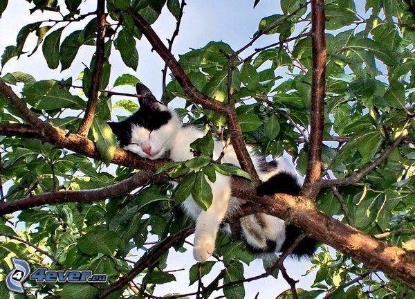Katze auf einem Baum, Schlafen, Ast, Blätter
