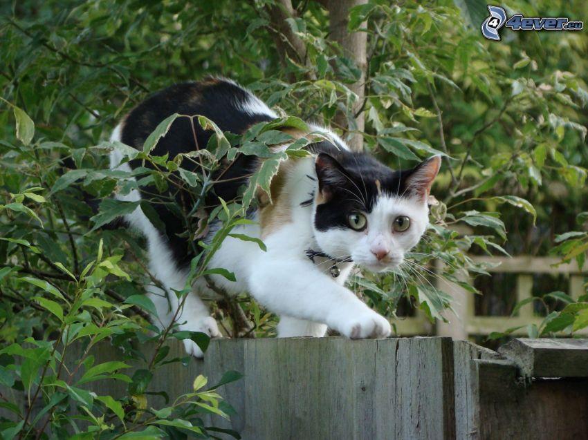 Katze auf Zaun, gescheckte Katze