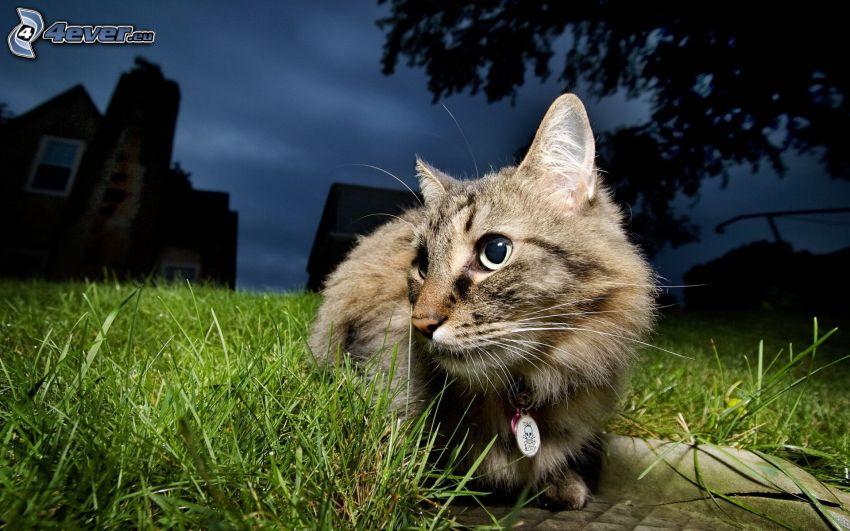 Katze im Gras, Häuser, Nacht