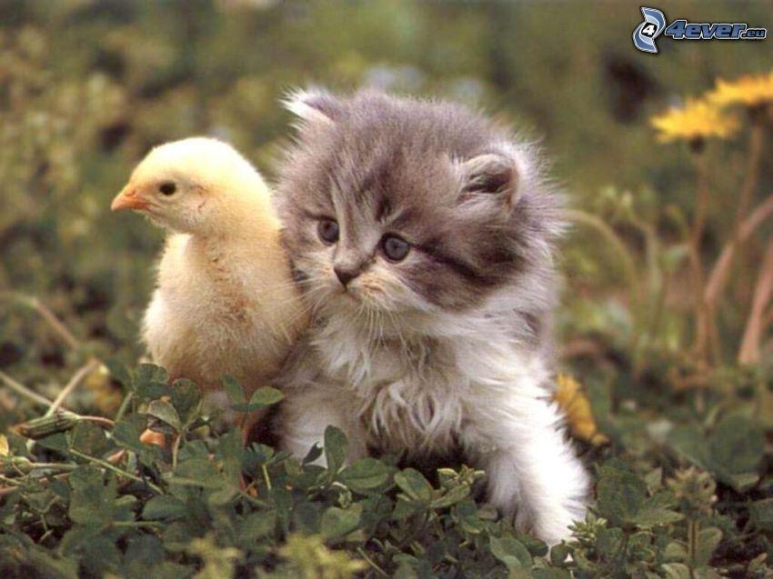 Katze und Huhn, Gras, Blumen