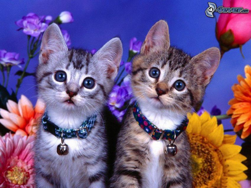 Katzen, Blick, Blumen
