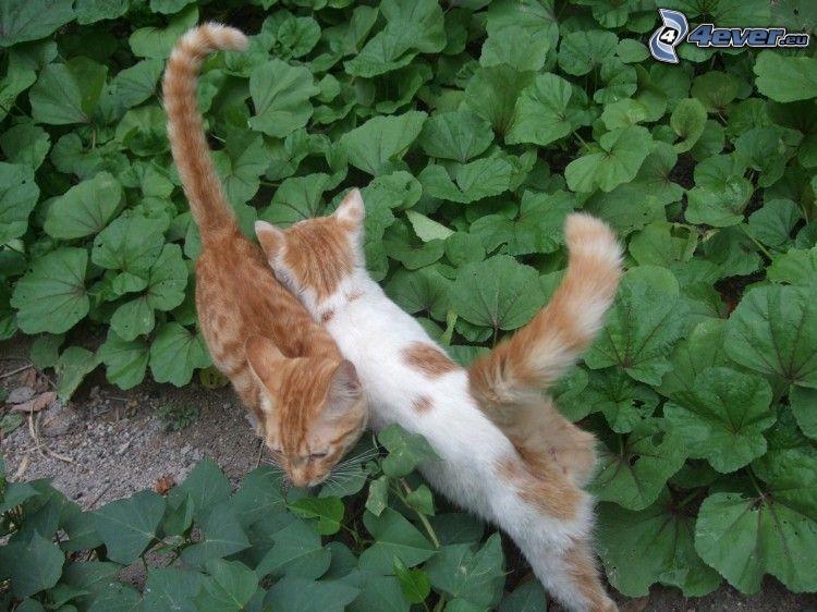 Katzen, braune Katze, grüne Blätter