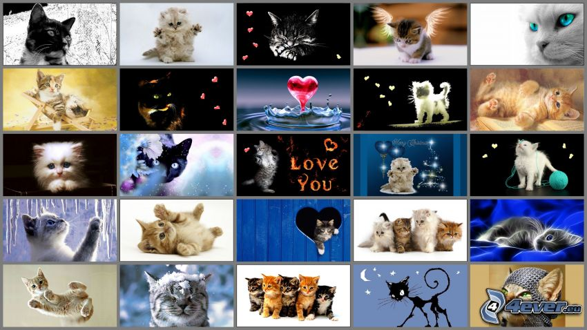 Katzen, Collage, Herzen