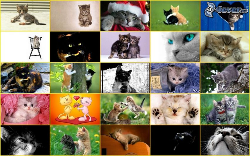 Katzen, Collage
