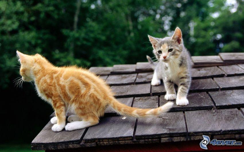 Katzen, Dach