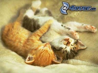 Katzen, Decke