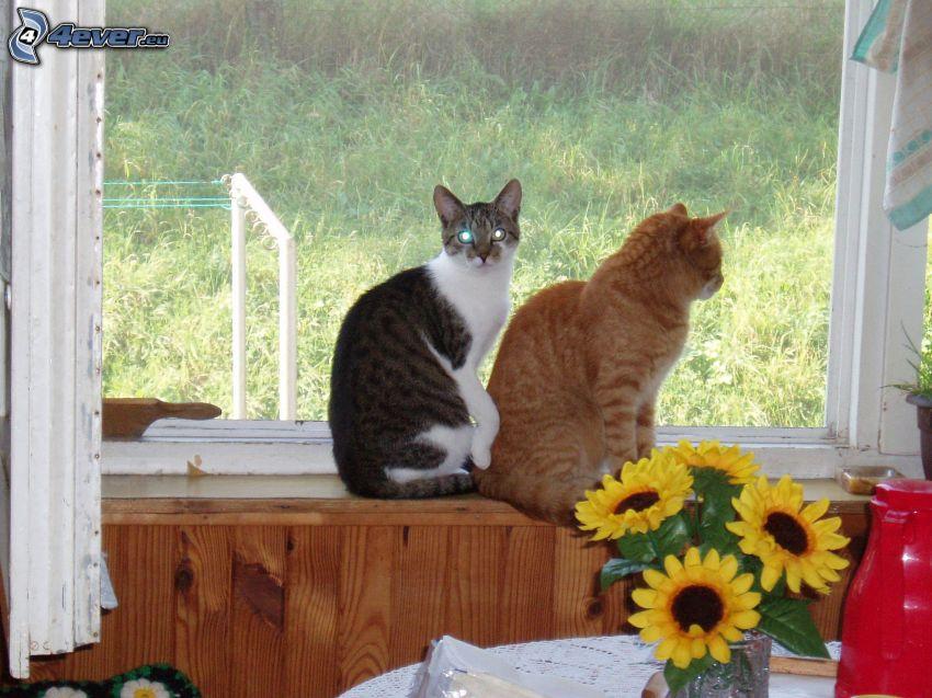 Katzen, Fenster, Blumen