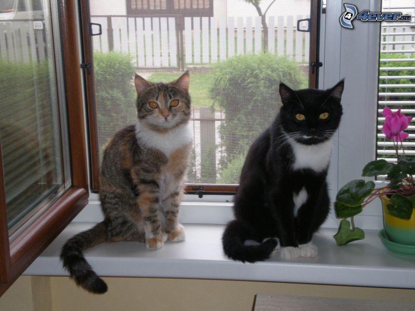 Katzen, Fenster