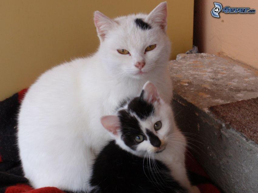 Katzen, gefleckt Kätzchen