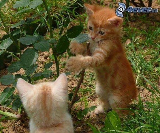 Katzen, Gras, Pflanze