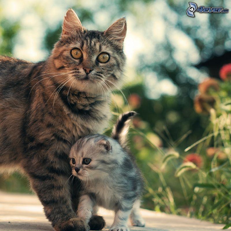 Katzen, Kätzchen