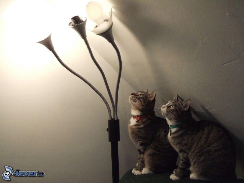 Katzen, Lampe