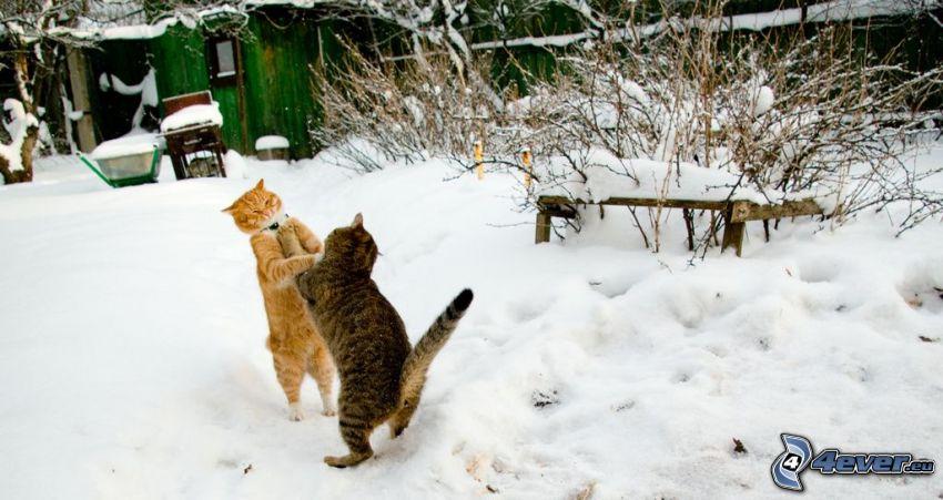 Katzen, Schnee