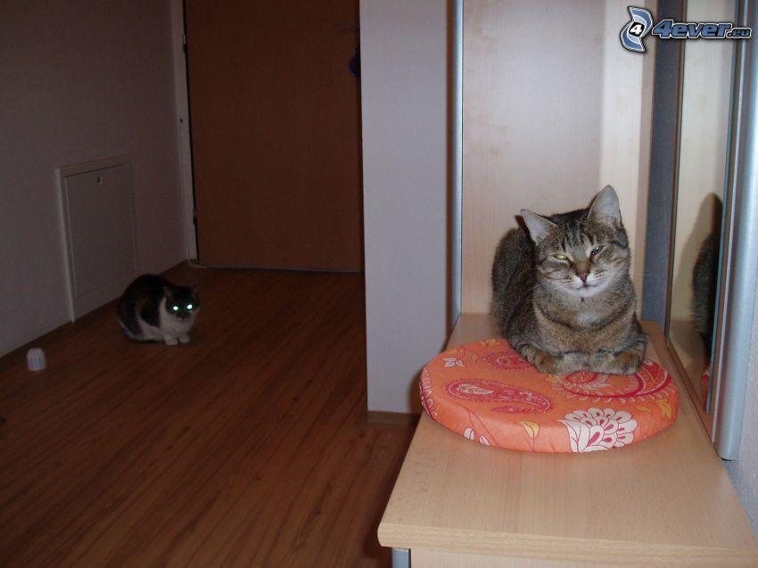 Katzen, Wohlbefinden