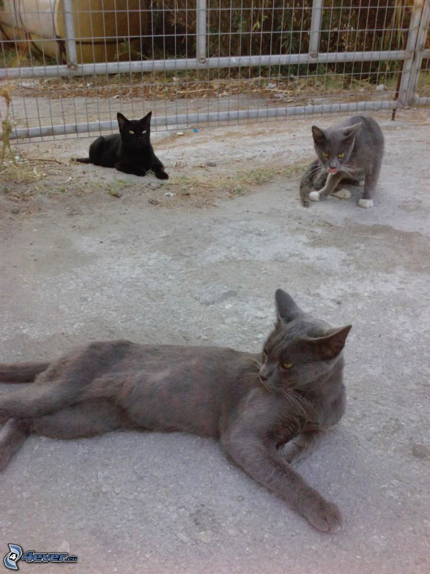 Katzen, Zaun