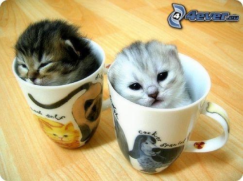kleine Kätzchen, Gläser