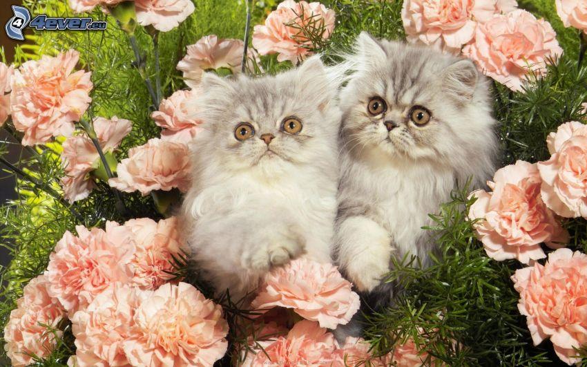 kleine Kätzchen, Rosen