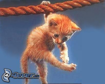 kleine rothaarige junge Katze, Seil