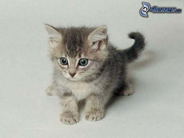 kleines graues Kätzchen, Angst