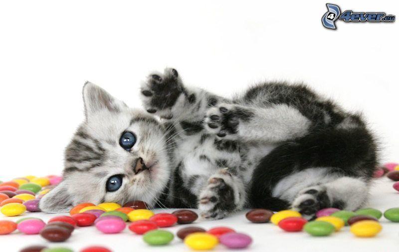 kleines graues Kätzchen, Smarties