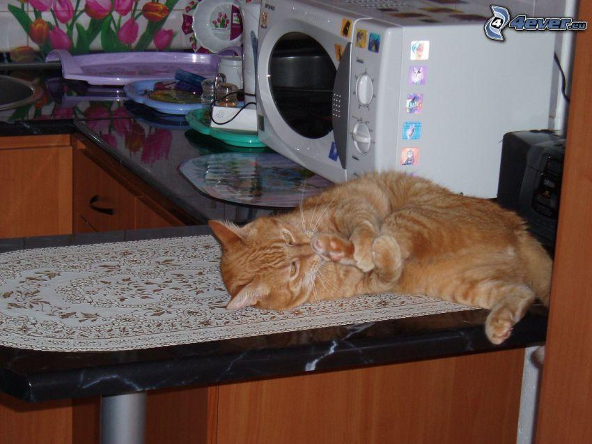rothaarige Katze, Küche