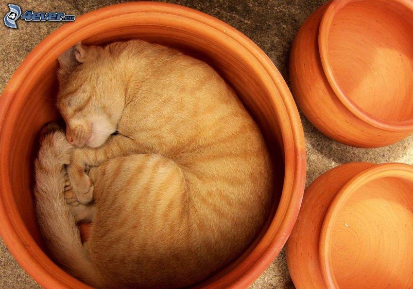 schlafende Katze, Blumentopf