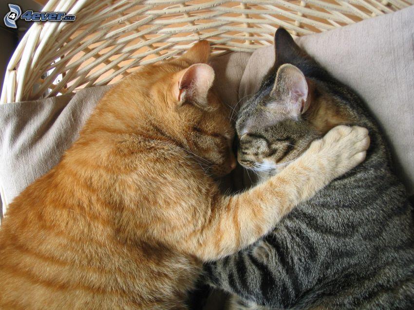 schlafende Katzen, Umarmung, Katzen im Korb