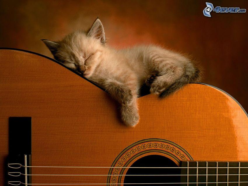 Schlafendes Kätzchen, Gitarre