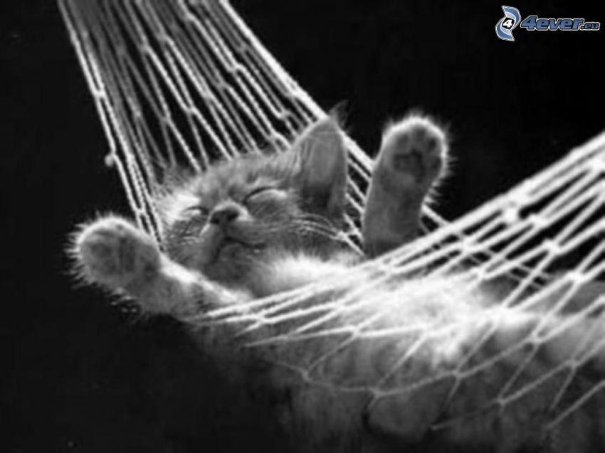 Schlafendes Kätzchen, Hängematte, Rast